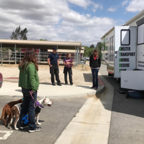 Shelter Transport Animal Rescue Team's Photo