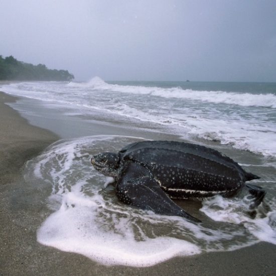 BIOSPHERE EXPEDITIONS' Photo