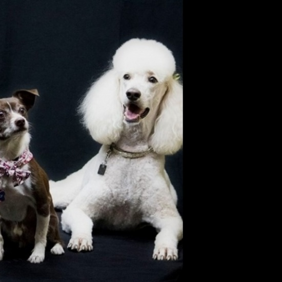Alliance Of Therapy Pets' Photo