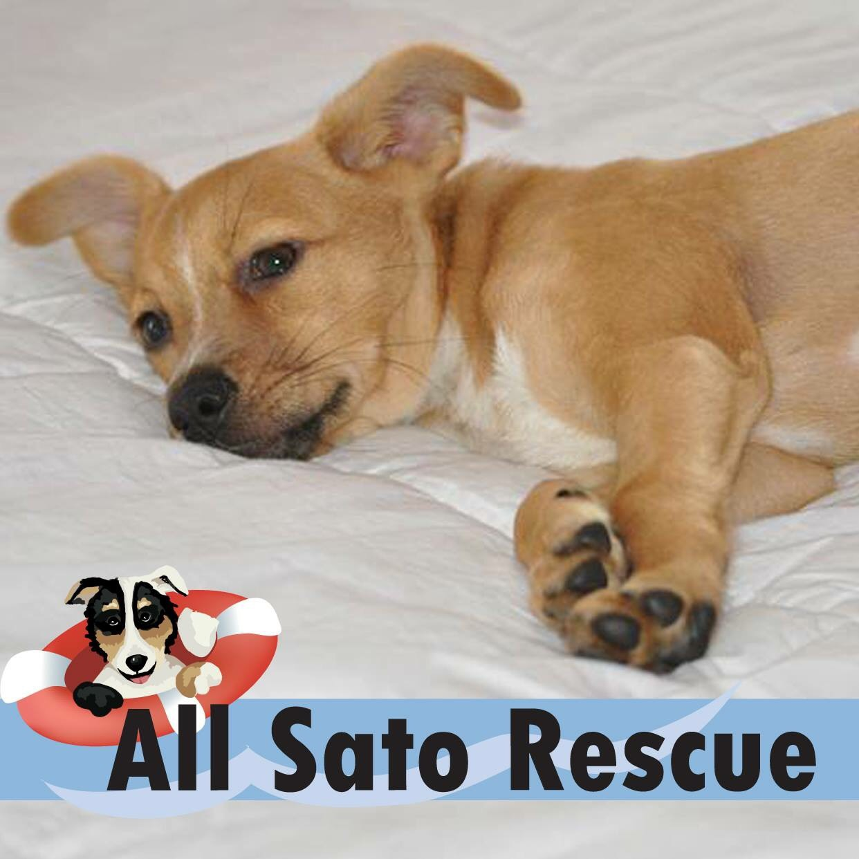 ALL SATOS RESCUE