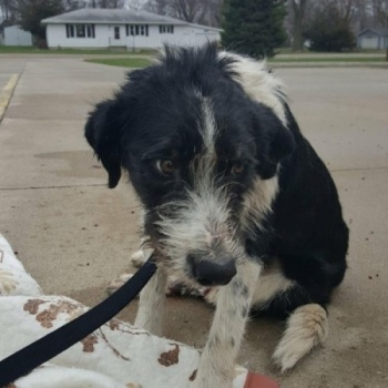 Fundraiser for Buddy's surgery