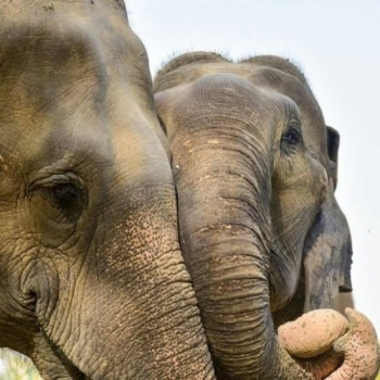 Saving abused elephants: from Circus to Sanctuary Image