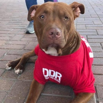 Official Detroit Dog Rescue Walk To Rescue Team
