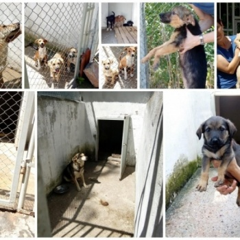 Save stray dogs in Bulgaria