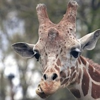 Zoo Boise's Conservation Fund