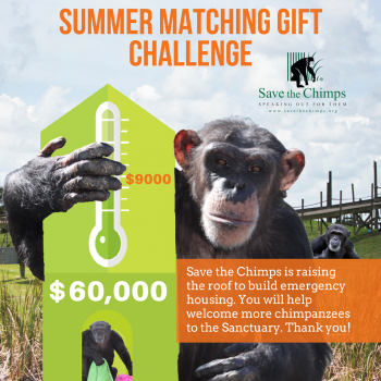 Save the Chimps August Match