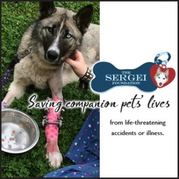 Sergei Foundation $5,000 Campaign