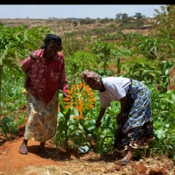 Wolala Agriculture Development Network
