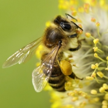 Greenpeace working to Save the Bees