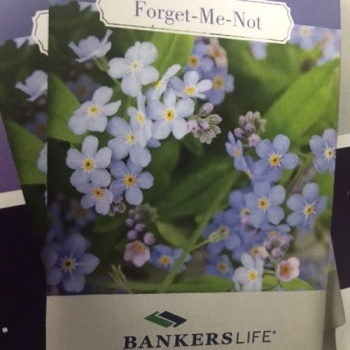 Bankers Life Forget Me Not Days BSO# 5041