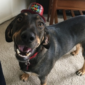 Brown County Humane Society's 2017 Dawg Gone Walk & Fiesta King & Queen Contest
