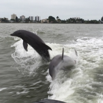 Run for the dolphins