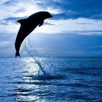Rombachs for Dolphins Freedom