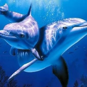 Save the Dolphins in Taiji