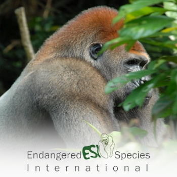 Protecting and Preserving Biodiversity