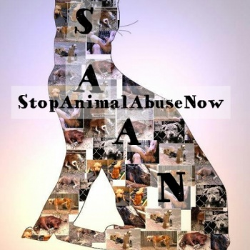 S.A.A.N. Stop Animal Abuse Now Image