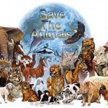 A SUSTAINABLE GIFT FOR ANIMAL WELFARE Image