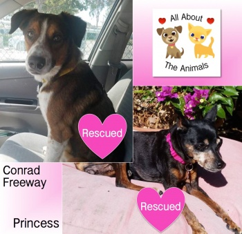 Help homeless pets such as Princess and Conrad Freeway