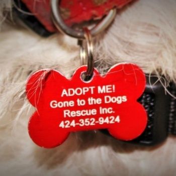 Gone to the Dogs Rescue Image
