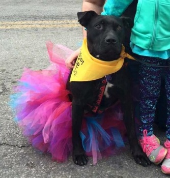 Barks & Beads at the Frenchtown Dog Park Royalty Contest