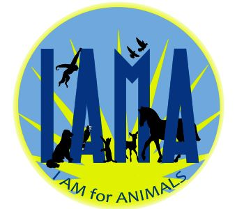 Animal Welfare - Home and Hospital for the Homeless and Abandoned Animals