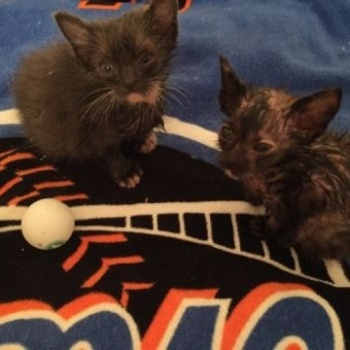 Kittens, fighting for their lives!