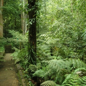 STEM Exploration: A Rain-forest Experience