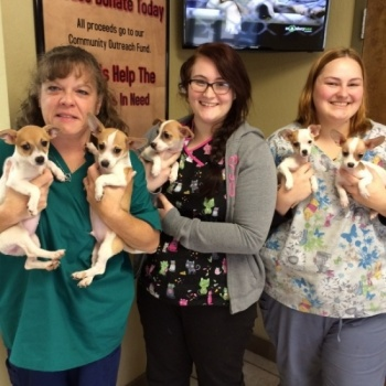 TLC PetSnip Spay Neuter Clinic