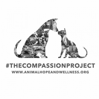 Christina & Courtney's Fundraiser to raise money for the dogs rescued from Yulin