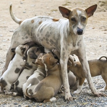Collecting Funds for Sterilizing 100 Dogs