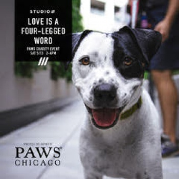 PAWS Charity Cycle: Love is a Four Legged Word