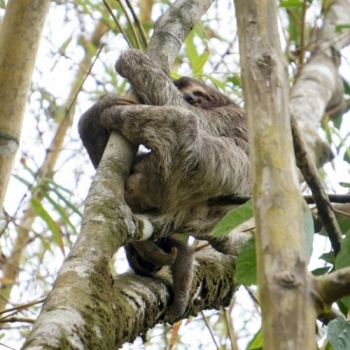Hiking for a Cause: The Slowinskis' Rainforest Trek