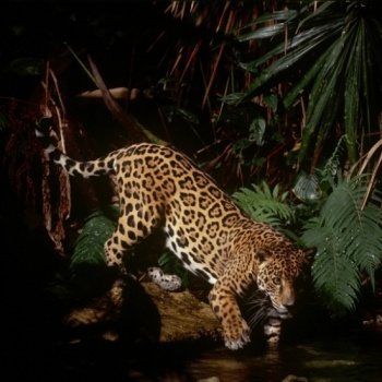 Saving Wildlands for Wildlife in Central Belize