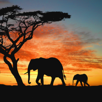 Save the Wild and Free Elephants