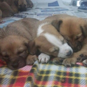 Help Save Homeless Dogs And Pups Image
