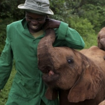 The David Sheldrick Wildlife Trust USA