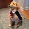 ProfessorBarkley's profile image - click for profile