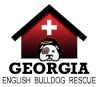 georgia-english-bulldog-rescue-inc's profile image - click for profile