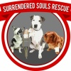 surrendered-souls-rescue-inc's profile image - click for profile