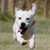 tipton-county-paws-and-claws's profile image - click for profile