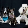 alliance-of-therapy-pets's profile image - click for profile