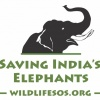 wildlifesos's profile image - click for profile