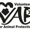 volunteersforanimalp's profile image - click for profile