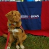herodogslucy's profile image - click for profile