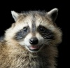 trashyraccoons's profile image - click for profile