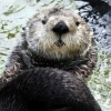 seaotterfoundationtrust's profile image - click for profile
