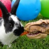 bunnyday's profile image - click for profile