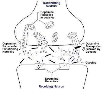 Dopamine illustation