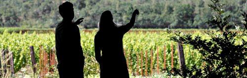 Wine Tasting Guide from Dan Dawson's Wine Advisor