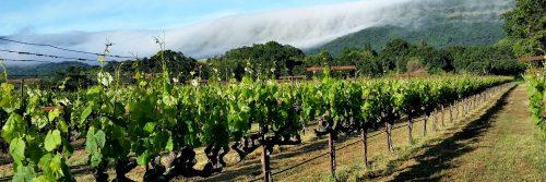 Rancho Chimiles Vineyard